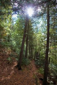 Sentier à Sainte-Agathe-des-Monts