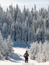 Randonnée et arbres enneigés