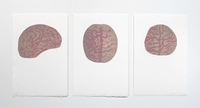 Anatomie de l'esprit