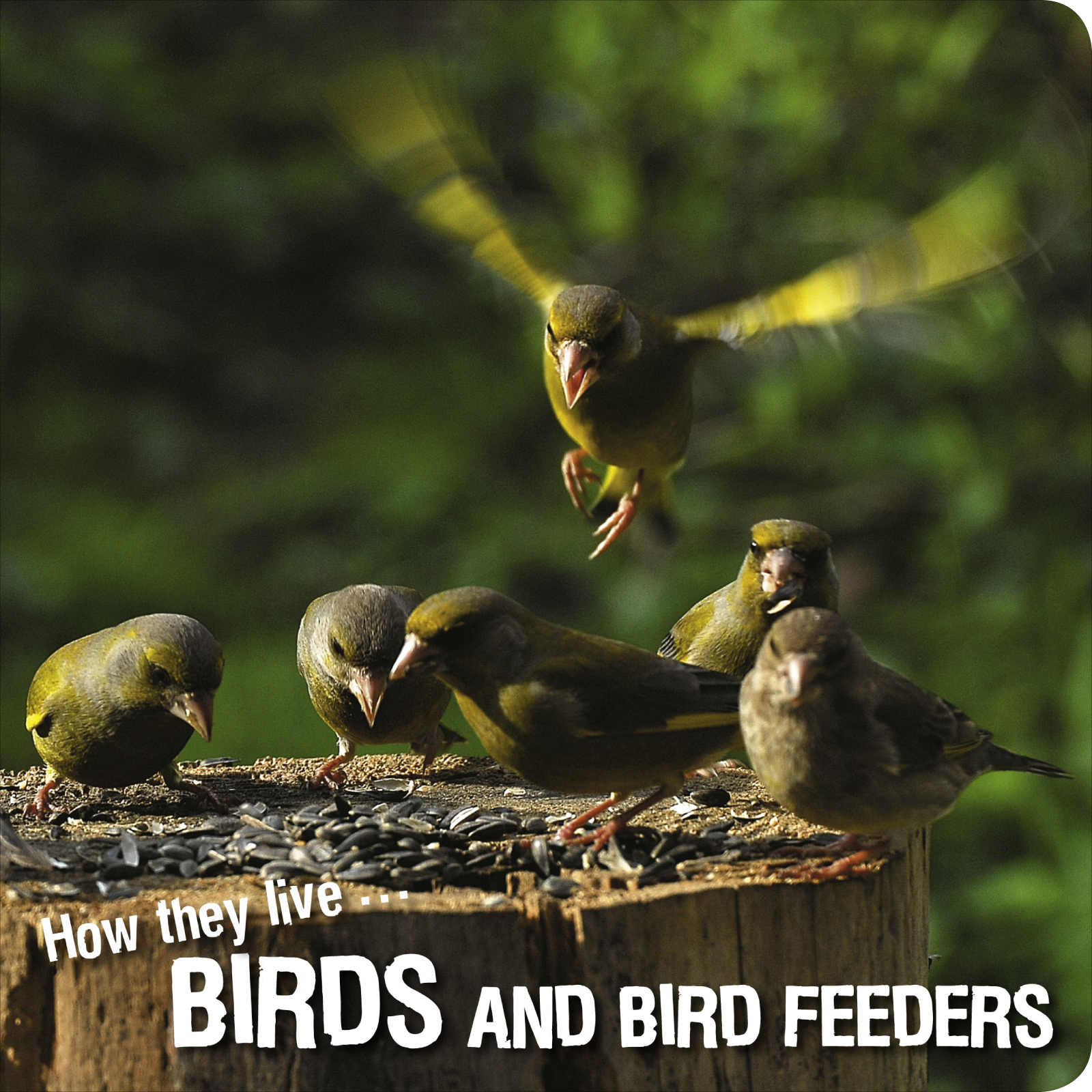How they live... Birds, Learn All There Is to Know About These Animals!
