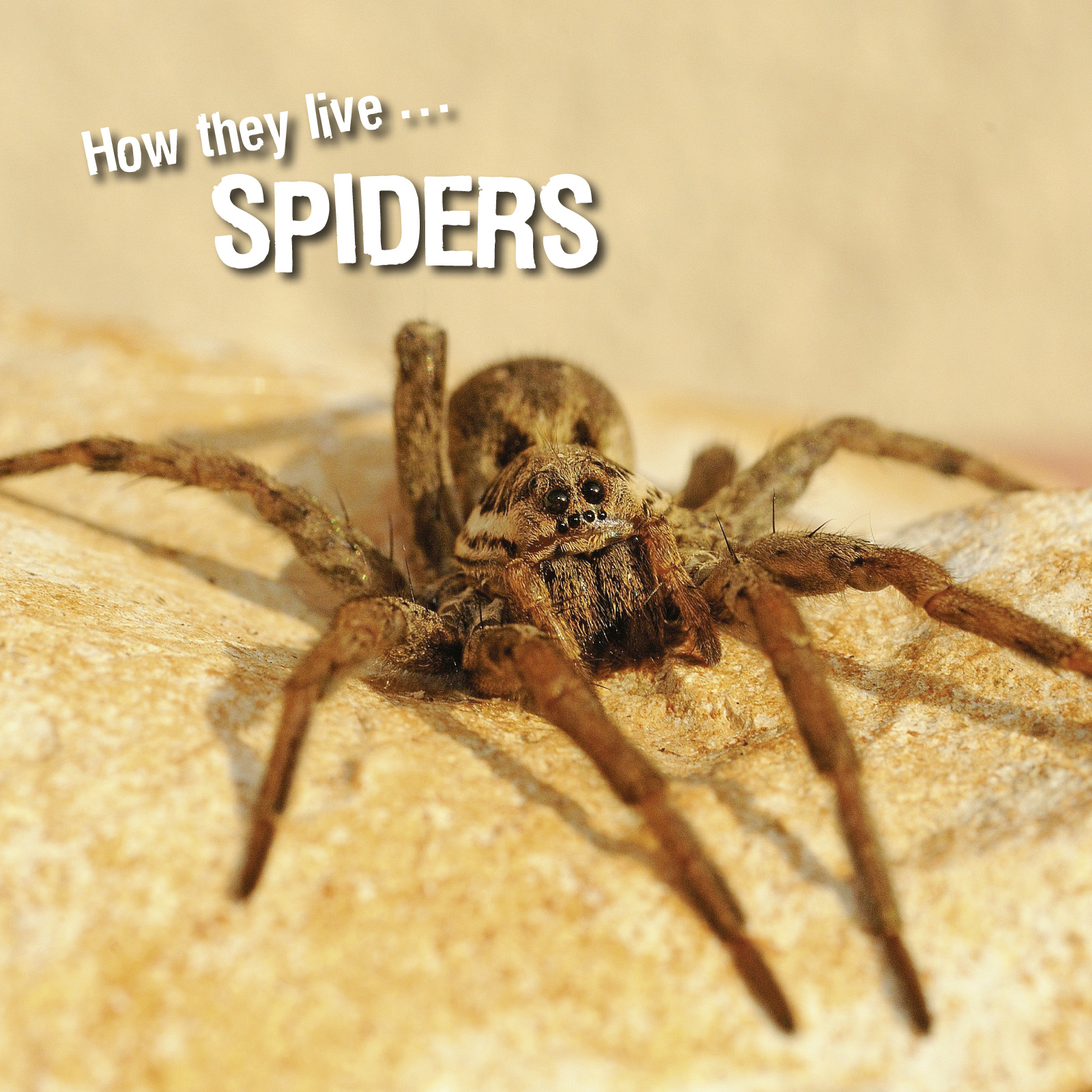 How they live... Spiders, Learn All There Is to Know About These Animals!
