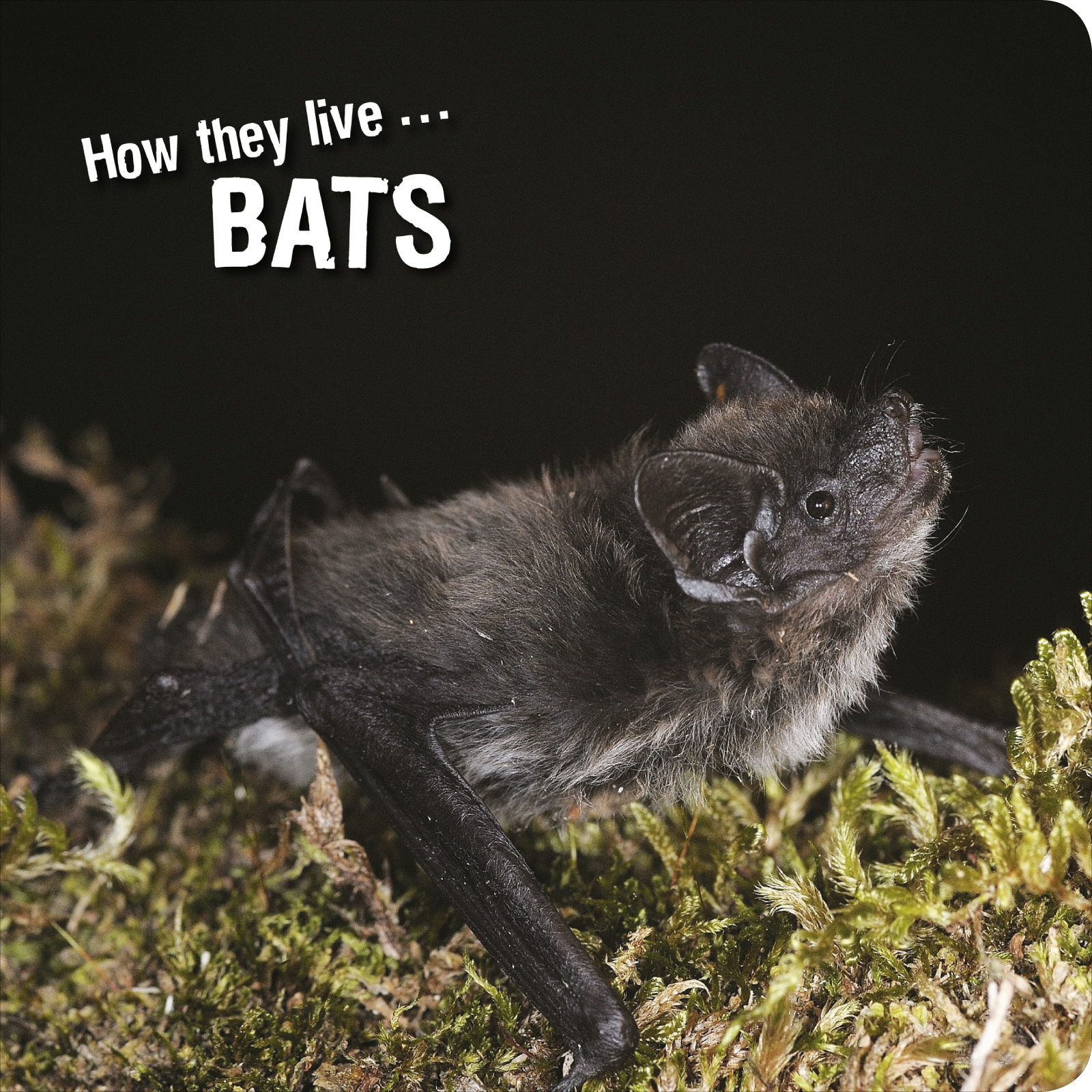 How they live... Bats