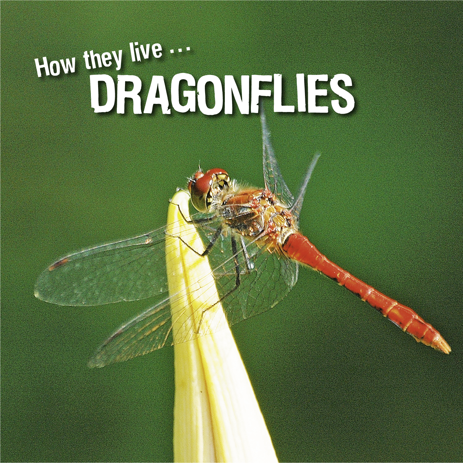 How they live... Dragonflies, Learn All There Is to Know About These Animals!